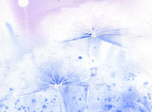116 Moonlit meadow