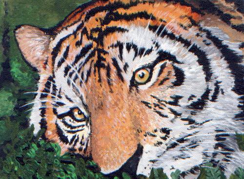 155 Tiger