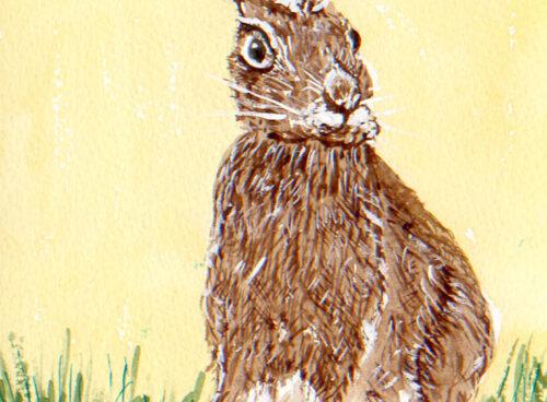 162 Hare