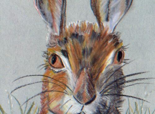 176 Hare