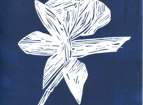 187 Daffodil