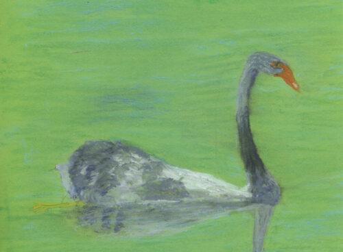 205 Black swan