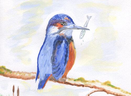 283 Kingfisher 1