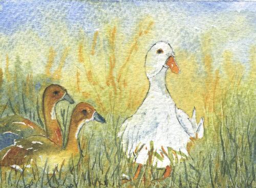 345 Mother duck