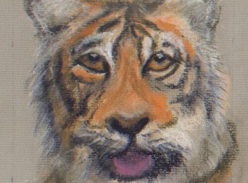 440 The tigress