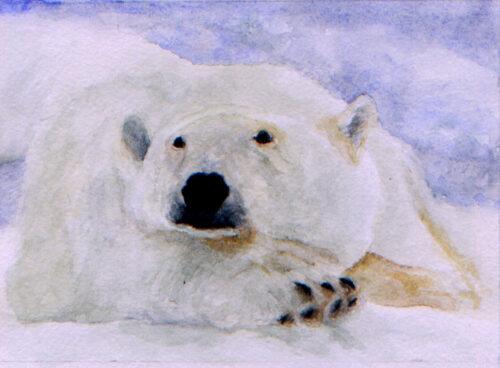 471 Polar bear