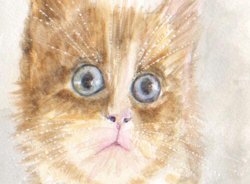 486 Valentine cat