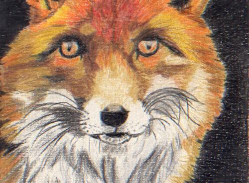 50 Fox