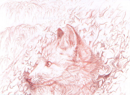 62 Fox cub in leaves