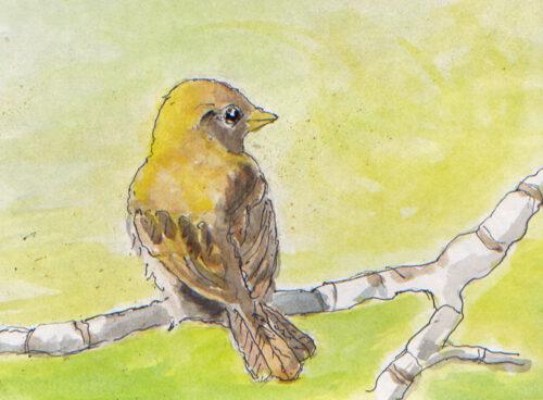 66 bird