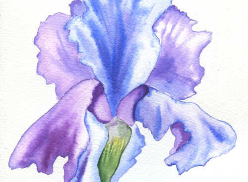 70 Iris